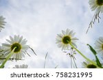 daisies on a cloudy day. bottom ... | Shutterstock . vector #758231995