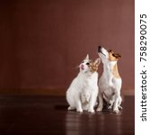 Stock photo dog and cat looking up friends pets 758290075