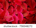 Fresh Tropical Red  Leaves...
