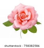 Stock photo beautiful rose isolated on white background 758382586