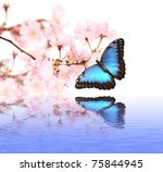 Stock photo spring blossoms with butterfly 75844945