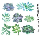 watercolor vintage succulents... | Shutterstock . vector #758483278