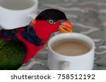 Colorful Parrot  With Coffee  ...