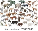 illustration with animals... | Shutterstock .eps vector #75852235