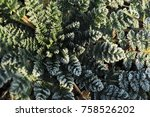 morning frost on small wild... | Shutterstock . vector #758526202
