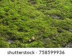 mosses are small flowerless... | Shutterstock . vector #758599936