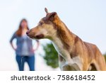 portrait of a hybrid dog with a ... | Shutterstock . vector #758618452