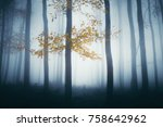 magical autumn forest with...   Shutterstock . vector #758642962