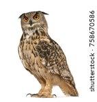 portrait of eurasian eagle owl  ... | Shutterstock . vector #758670586