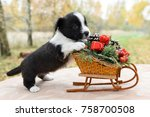 Stock photo funny welsh corgi pembroke puppy with new year sled with gifts on christmas 758700508