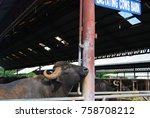 Small photo of This nice and gentle Carabao who lives on Carabao farm is waiting for someone.