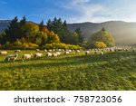 Flock Of Sheep In Autumn...