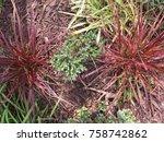 autumn garden textures | Shutterstock . vector #758742862