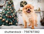 Stock photo cute little pomeranian dog on the sofa on christmas three background new year dog christmas dog 758787382