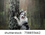 Stock photo funny the dog put his paws on the tree 758855662
