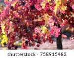 grapes in autumn | Shutterstock . vector #758915482