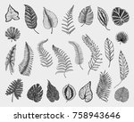 tropical or exotic leaves  leaf ... | Shutterstock .eps vector #758943646
