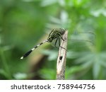 Stock photo dragonfly 758944756