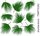 green palm leaves trachycarpus... | Shutterstock .eps vector #758975182