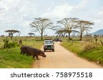 safari cars on game drive with...   Shutterstock . vector #758975518