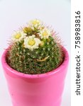 echinocactus with white flowers ... | Shutterstock . vector #758983816
