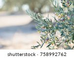 spanish olive grove  branch... | Shutterstock . vector #758992762