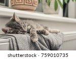 Cute Little Grey Kitten ...