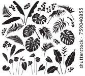 tropical plant set. black... | Shutterstock .eps vector #759040855