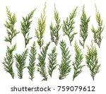 fresh green pine leaves... | Shutterstock . vector #759079612
