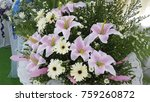 Lilies And Daisies
