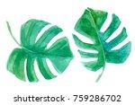 set of watercolor tropical... | Shutterstock . vector #759286702