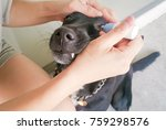 woman applying antibiotic eye...   Shutterstock . vector #759298576