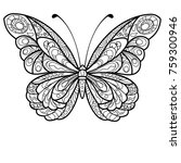 Detailed Butterfly Drawing
