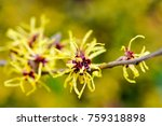 close up of beautiful chinese... | Shutterstock . vector #759318898