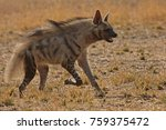 striped hyena running at... | Shutterstock . vector #759375472