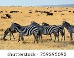 african landscape. zebras herd... | Shutterstock . vector #759395092