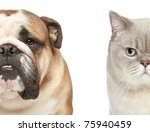 Stock photo dog and cat half of muzzle close up portrait on a white background 75940459