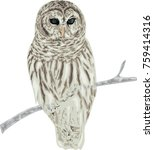 owl sitting on branch | Shutterstock .eps vector #759414316