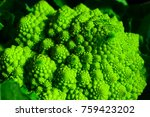 green cauliflower  broccoli... | Shutterstock . vector #759423202