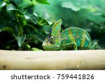 Small photo of Close up portrait of chameleon adhere on a brown timber with a green leaves and tree nature background.