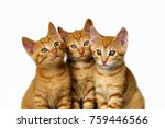 Stock photo three cute little kittens red mackerel tabby european shorthair friends side by side heads 759446566