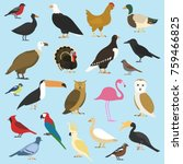Set Of Domestic Birds And...