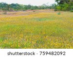 wildflowers field in the nature. | Shutterstock . vector #759482092