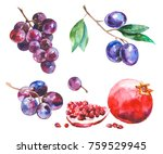 watercolor painted collection... | Shutterstock . vector #759529945