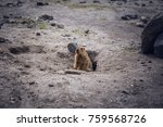 the marmots had become tame... | Shutterstock . vector #759568726
