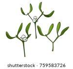 three color mistletoes.... | Shutterstock .eps vector #759583726