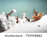 ants ride sledge and play... | Shutterstock . vector #759598882