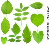 collection of green leaf | Shutterstock . vector #75961624