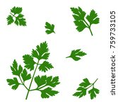vector twigs of parsley | Shutterstock .eps vector #759733105