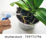 plant care orchids | Shutterstock . vector #759771796